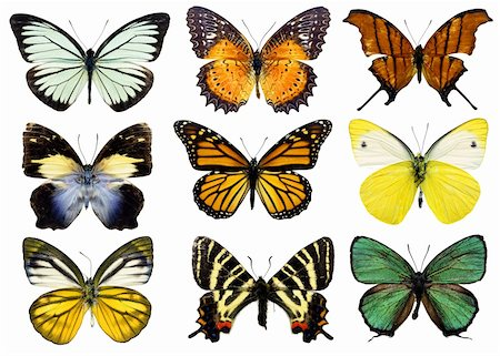 Some various butterflies isolated on white Stock Photo - Budget Royalty-Free & Subscription, Code: 400-04376594