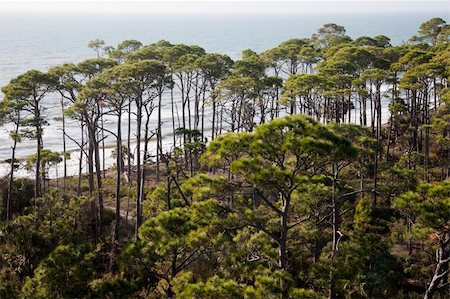 Forest by the sea - Florida, Gulf of Mexico Stock Photo - Budget Royalty-Free & Subscription, Code: 400-04377092