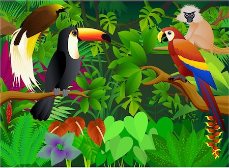 vector illustration of animal in the tropical jungle Stock Photo - Budget Royalty-Free & Subscription, Code: 400-04386963