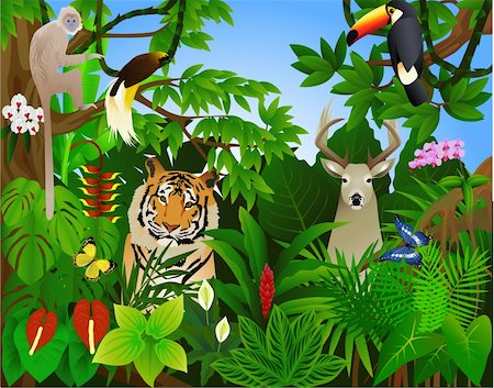 Animal in the tropical jungle Stock Photo - Budget Royalty-Free & Subscription, Code: 400-04387010