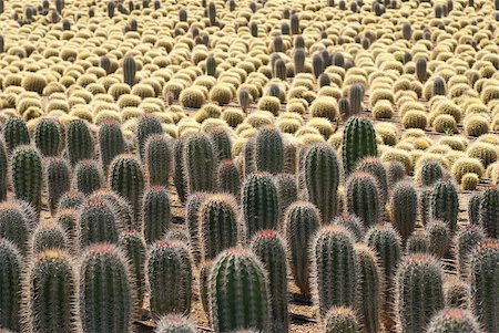Farm producing a wealth of different cactus species Stock Photo - Budget Royalty-Free & Subscription, Code: 400-04399777