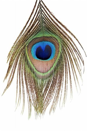 Detail of peacock feather eye on white background Stock Photo - Budget Royalty-Free & Subscription, Code: 400-04390990