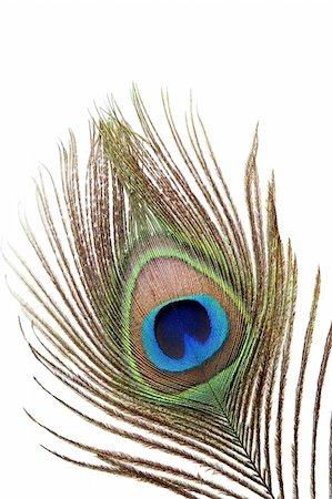Detail of peacock feather eye on white background Stock Photo - Budget Royalty-Free & Subscription, Code: 400-04390991