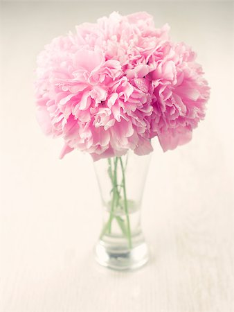 peonies background - Vase of beautiful peony flowers on wooden background Stock Photo - Budget Royalty-Free & Subscription, Code: 400-04406241