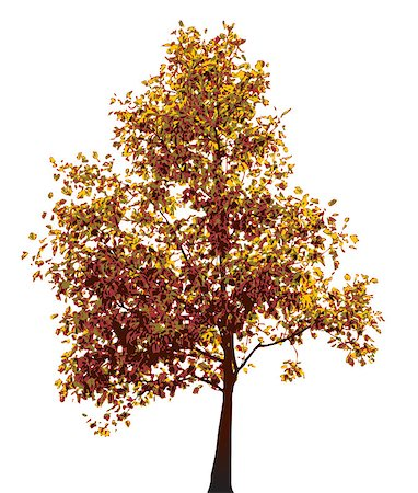 pretty in black clipart - Colorful autumn tree isolated on white background Stock Photo - Budget Royalty-Free & Subscription, Code: 400-04406361