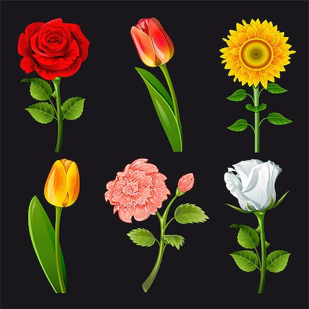 Collection of flowers of different colors. Vector. Stock Photo - Budget Royalty-Free & Subscription, Code: 400-04403802