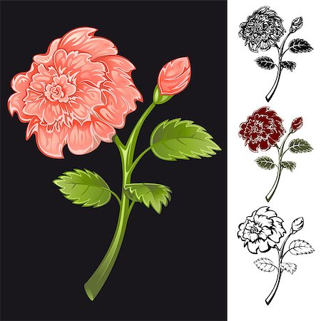 peonies clipart - Collection of flowers of different colors. Vector. Stock Photo - Budget Royalty-Free & Subscription, Code: 400-04403803