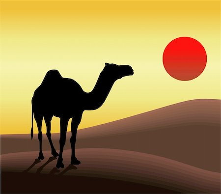 Camel in desert and sunset. Stock Photo - Budget Royalty-Free & Subscription, Code: 400-04436239