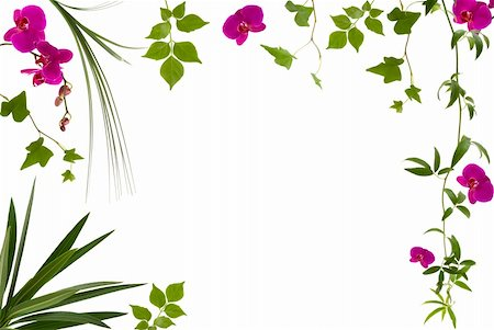 Beautiful floral frame with different leaves and orchids Stock Photo - Budget Royalty-Free & Subscription, Code: 400-04467768