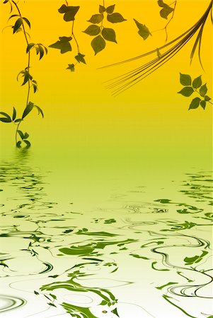Different kinds of leaves with water reflection Stock Photo - Budget Royalty-Free & Subscription, Code: 400-04475465