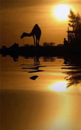 A camel in Egypt with the water reflection. Stock Photo - Budget Royalty-Free & Subscription, Code: 400-04475538