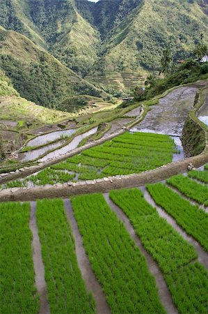 philippine terrace farming - rice terraces in northern luzon the philippines Stock Photo - Budget Royalty-Free & Subscription, Code: 400-04508990