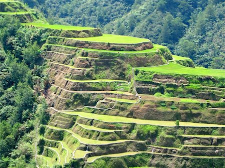 philippine terrace farming - Banaue rice terraces in Ifugao province, Philippines. Stock Photo - Budget Royalty-Free & Subscription, Code: 400-04517848