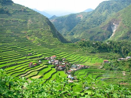 philippine terrace farming - Batad rice terraces village in Ifugao province, Philippines. Stock Photo - Budget Royalty-Free & Subscription, Code: 400-04517849