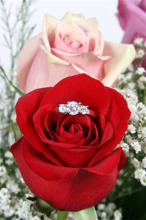 Wedding Ring in Rose, Will you marry me? Stock Photo - Budget Royalty-Free & Subscription, Code: 400-04524307