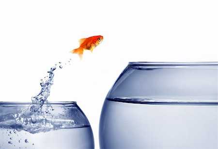 goldfish jumping out of the water Stock Photo - Budget Royalty-Free & Subscription, Code: 400-04545787