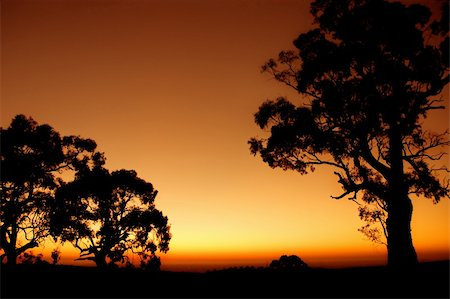 Silhouette of Tree outback Australian plains Stock Photo - Budget Royalty-Free & Subscription, Code: 400-04564312