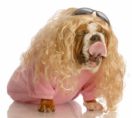 funny dog dressed in drag - english bulldog dressed up as a beautiful blonde woman Stock Photo - Budget Royalty-Free & Subscription, Code: 400-04584822