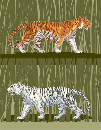 roar lion head picture - Two tigers white and striped go among a reed. Stock Photo - Budget Royalty-Free & Subscription, Code: 400-04599265