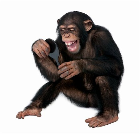 smiling chimpanzee - Young Chimpanzee looking himself at the mirror in front of a white background Stock Photo - Budget Royalty-Free & Subscription, Code: 400-04617007