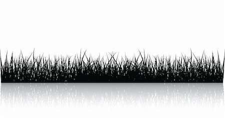 Black Vector Grass Isolated On White Stock Photo - Budget Royalty-Free & Subscription, Code: 400-04611459