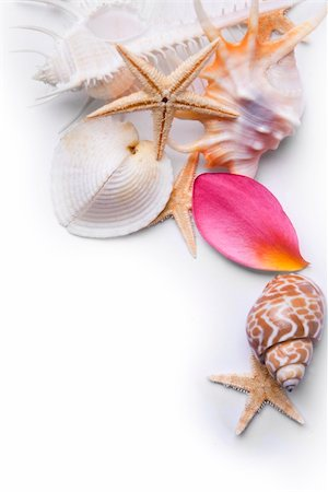 spanishalex (artist) - Starfish seashells and pink frangipani petals over a white background Stock Photo - Budget Royalty-Free & Subscription, Code: 400-04638537