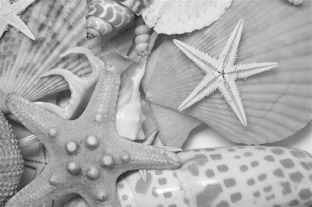 simsearch:400-04638538,k - Assorted seashells in very soft light and in mono Stock Photo - Budget Royalty-Free & Subscription, Code: 400-04640321