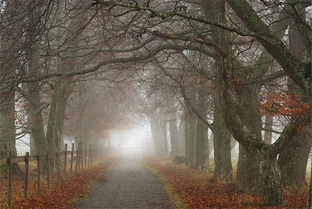 Footpath on an early misty morning in the fall Stock Photo - Budget Royalty-Free & Subscription, Code: 400-04668869