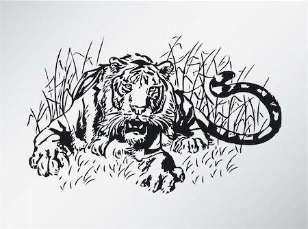drawn curved - Black white vector illustration of tiger Stock Photo - Budget Royalty-Free & Subscription, Code: 400-04675152