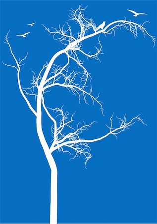 detailed tree silhouette with birds, vector background Stock Photo - Budget Royalty-Free & Subscription, Code: 400-04678609