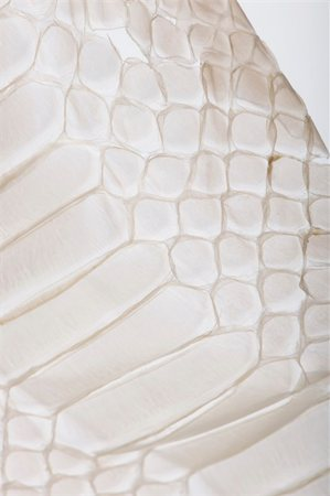 snake skin - Close-up of squamata, scaled reptile Stock Photo - Budget Royalty-Free & Subscription, Code: 400-04670088