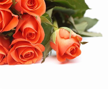 dozen roses - Bouquet of orange roses isolated on a white background with copyspace Stock Photo - Budget Royalty-Free & Subscription, Code: 400-04672034