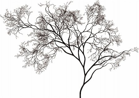 detailed tree silhouette, vector Stock Photo - Budget Royalty-Free & Subscription, Code: 400-04684201