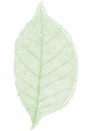 green leaf with detailed texture, vector Stock Photo - Budget Royalty-Free & Subscription, Code: 400-04682921