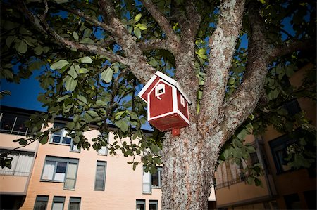 Birdhouse in the Neighborhod Stock Photo - Budget Royalty-Free & Subscription, Code: 400-04694512