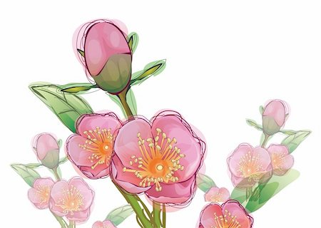 peony illustrations - illustration drawing of pink sakura flower in a white background Stock Photo - Budget Royalty-Free & Subscription, Code: 400-04696308