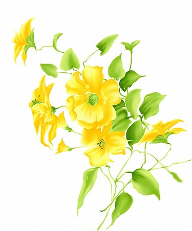 some beautiful yellow flowers  in a white background Stock Photo - Budget Royalty-Free & Subscription, Code: 400-04697969
