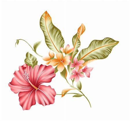 simsearch:400-04697977,k - illustration drawing of red flower in a white background Stock Photo - Budget Royalty-Free & Subscription, Code: 400-04697995