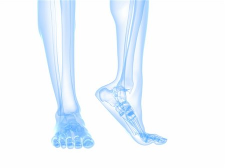 3d rendered illustration of transparent foots with healthy ankles Stock Photo - Budget Royalty-Free & Subscription, Code: 400-04693064
