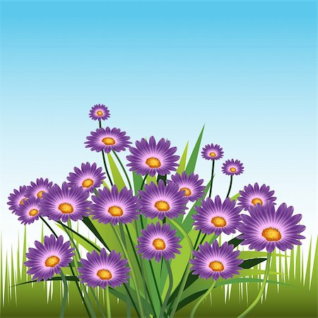 An image of purple daisies. Stock Photo - Budget Royalty-Free & Subscription, Code: 400-04707364