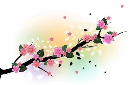 simsearch:400-04697977,k - drawing of a branch of beautiful sakura flower, drawing of a branch of beautiful sakura flower Stock Photo - Budget Royalty-Free & Subscription, Code: 400-04700652