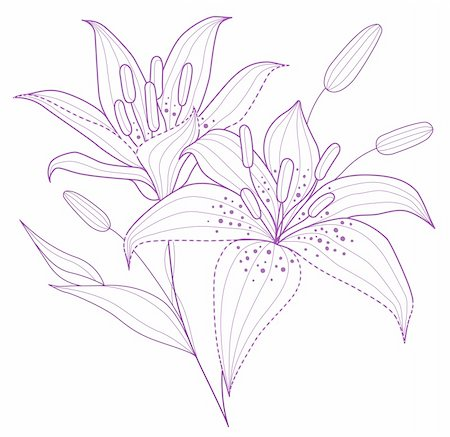 simsearch:400-04697977,k - drawing of purple flower in a white background Stock Photo - Budget Royalty-Free & Subscription, Code: 400-04700795