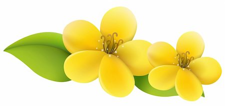 simsearch:400-04697977,k - drawing of beautiful yellow flower in a white background Stock Photo - Budget Royalty-Free & Subscription, Code: 400-04702760