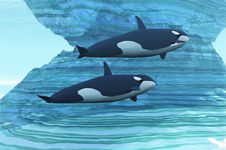 Two killer whales swim around submerged icebergs. Stock Photo - Budget Royalty-Free & Subscription, Code: 400-04703189