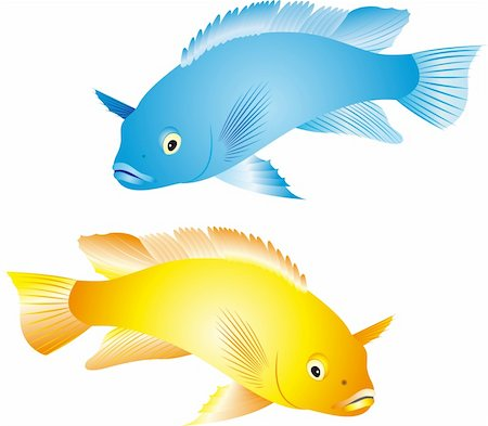 Illustration of a colorful tropical fish of the cichlid family isolated on white background Stock Photo - Budget Royalty-Free & Subscription, Code: 400-04719913