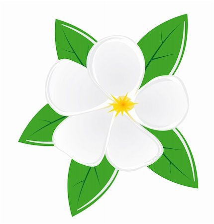 plant leaf paintings graphic - White magnolia flower with leaves. Vector illustration. Vector art in Adobe illustrator EPS format, compressed in a zip file. The different graphics are all on separate layers so they can easily be moved or edited individually. The document can be scaled to any size without loss of quality. Stock Photo - Budget Royalty-Free & Subscription, Code: 400-04734625