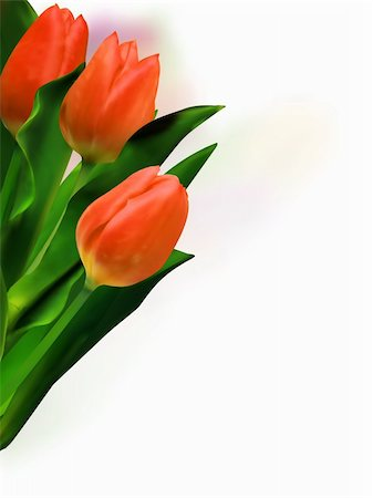 florist vector - Bunch of beautiful spring flowers - colorful tulips against white background. EPS 8 vector file included Stock Photo - Budget Royalty-Free & Subscription, Code: 400-04738964