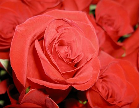 dozen roses - Bouquet of flowers of bright red roses close Stock Photo - Budget Royalty-Free & Subscription, Code: 400-04768221