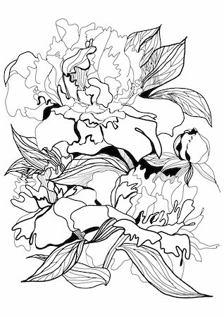 peony illustrations - drawing peony monochrome graphic sketch illustration Stock Photo - Budget Royalty-Free & Subscription, Code: 400-04776695