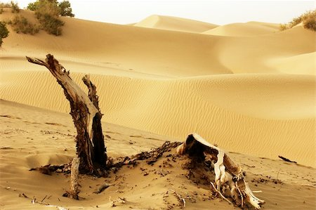 Landscape of dead trees and sandhills of deserts Stock Photo - Budget Royalty-Free & Subscription, Code: 400-04797095